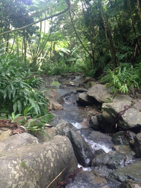 A creek in El Yunque, Puerto Rico