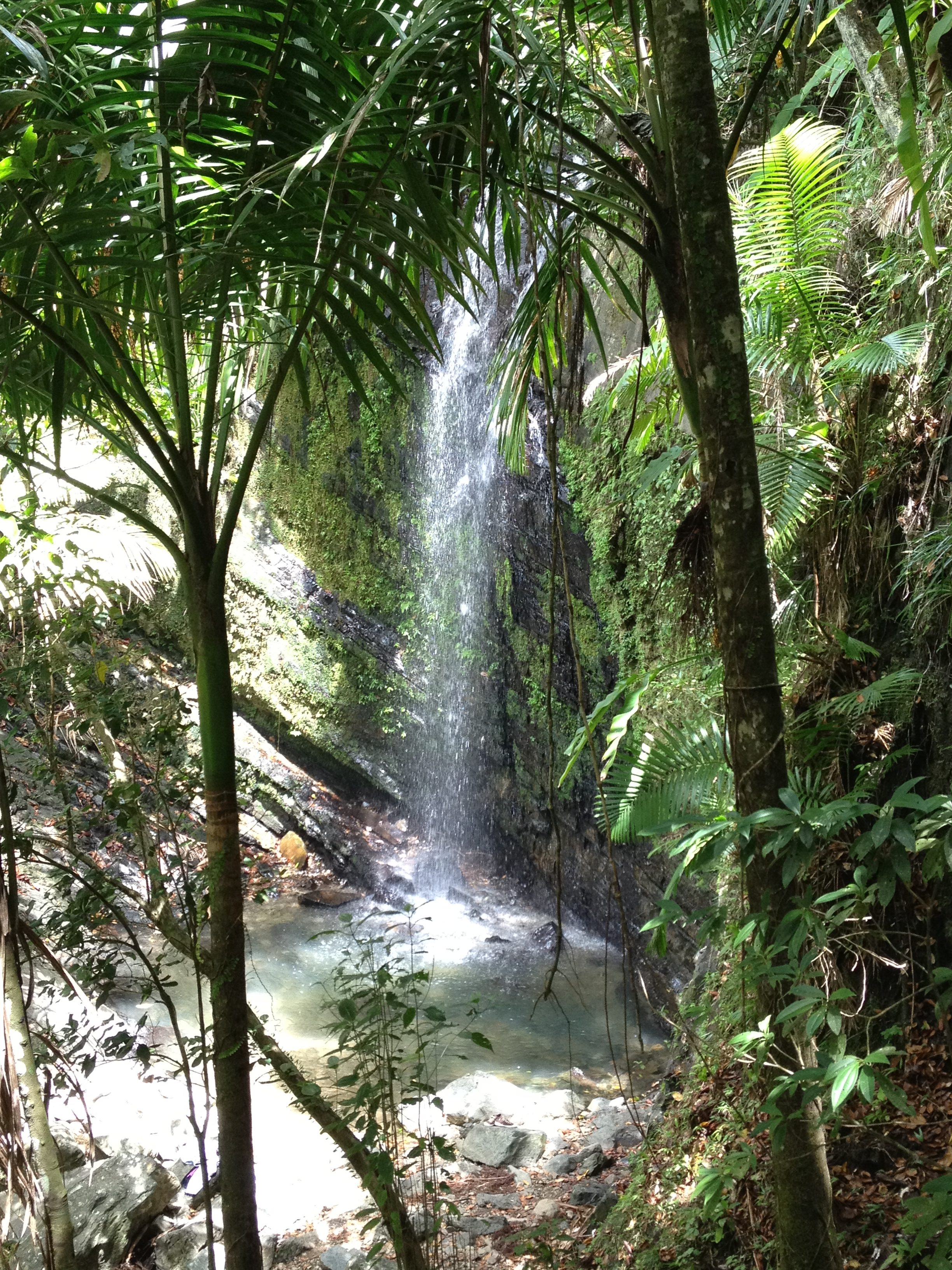El Yunque National Rain Forest
