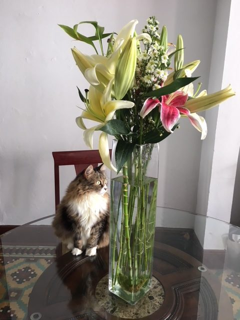 Flora Cat and Flowers
